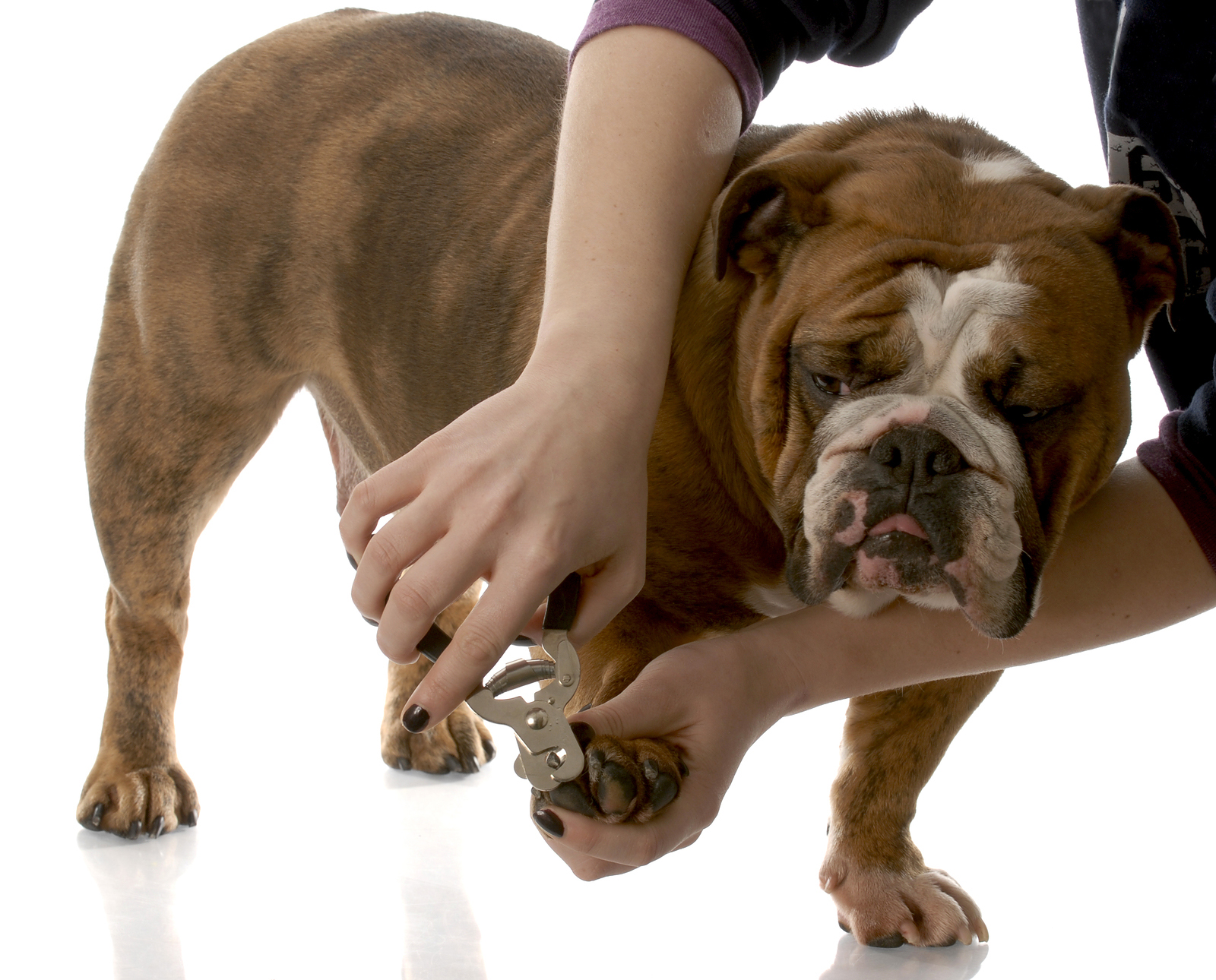 10 Dog Care Tips – Caring for your Dog