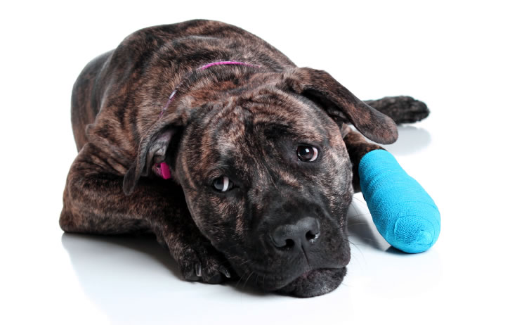 Treating Dog Wounds and Injuries