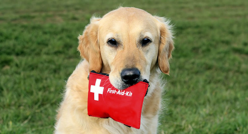 Giving your Dog Emergency First Aid