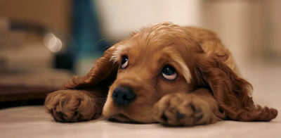 Emotional Disorders in Dogs